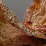 Corry Zwart - Blooming boudoir - foto op forex - 100x75 cm